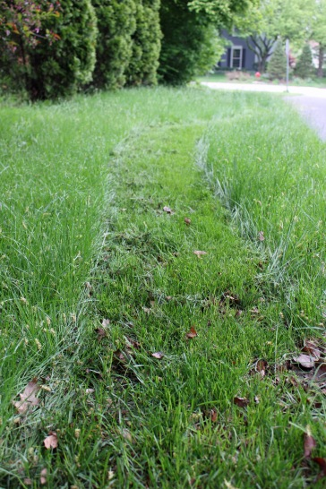 Path in the Grass 4