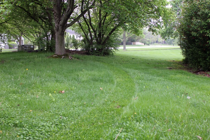 Path in the Grass 5