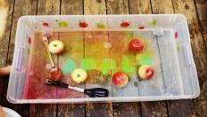 Fall Apple Sensoryy Bin